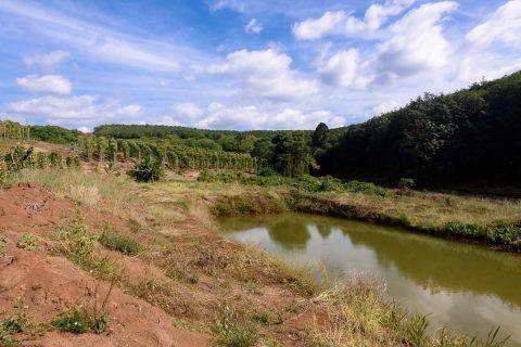 Wassergrube zur Bewässerung von Pfefferpflanzen