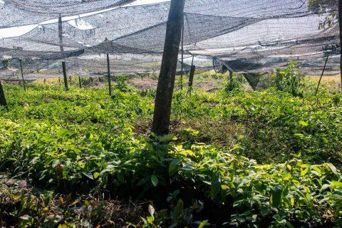 Stecklingsfarm