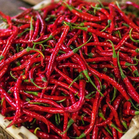 """Chili (capsicum annuum), auch bekannt als """"Spanischer Pfeffer"""""""