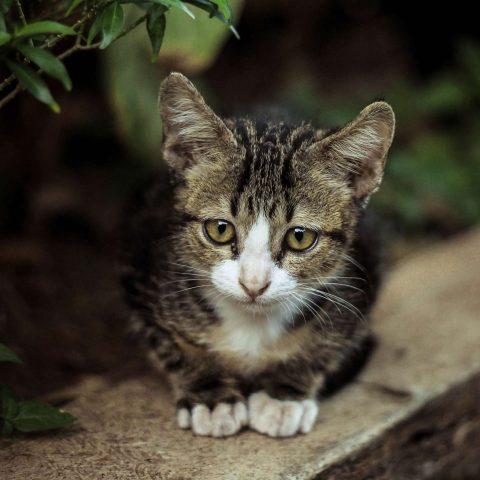 Pfeffer gegen Katzen: So hält das Gewürz Streuner fern