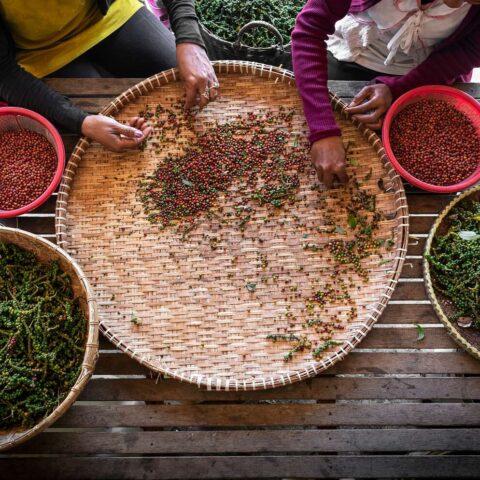 Kampot-Pfeffer aus Kambodscha – für Gourmets ein Genuss
