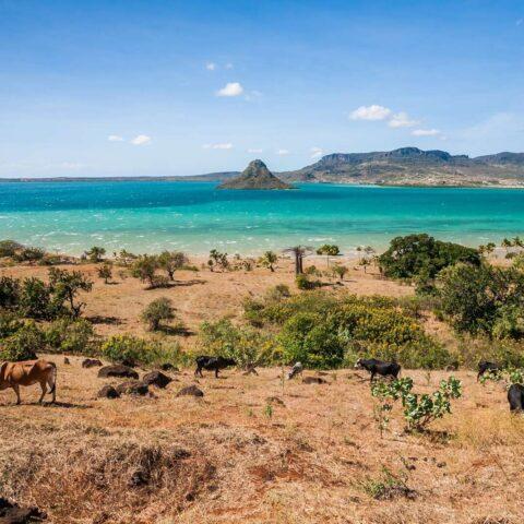 Pfeffer aus Madagaskar: Die große Insel und der Pfeffer