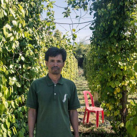 Pfeffer aus Kambodscha: ein edles Gewürz aus Südostasien